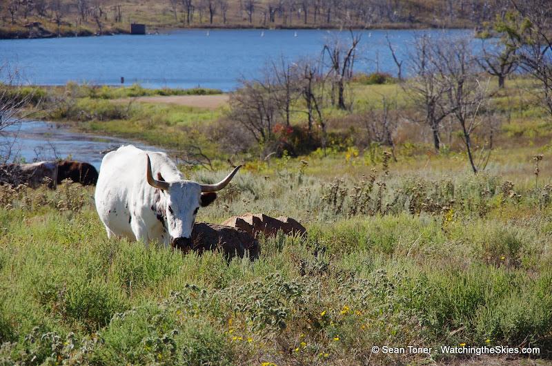 11-09-13 Wichita Mountains Wildlife Refuge - IMGP0408.JPG