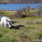11-09-13 Wichita Mountains Wildlife Refuge - IMGP0408.JPG