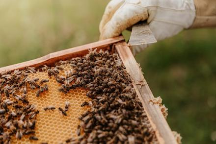 Τα αφανή θύματα των πυρκαγιών - Χάθηκαν 9000 μελισσοσμήνη και τόνοι μελιού