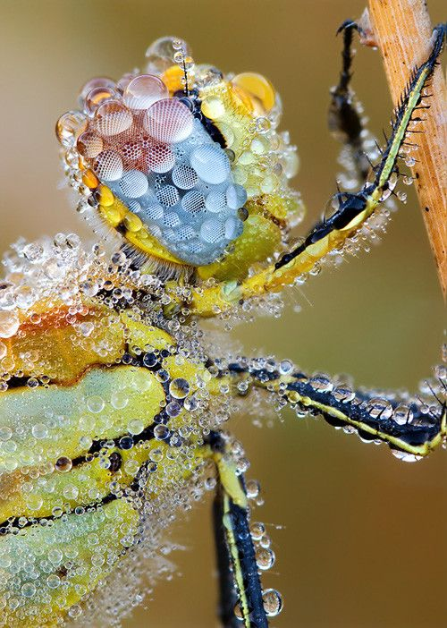 Insect in 50 Howling Examples of Dew Photography