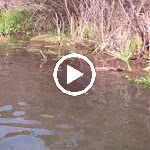 Videos - Travel
