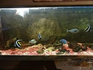 2016.03.14-032 poissons