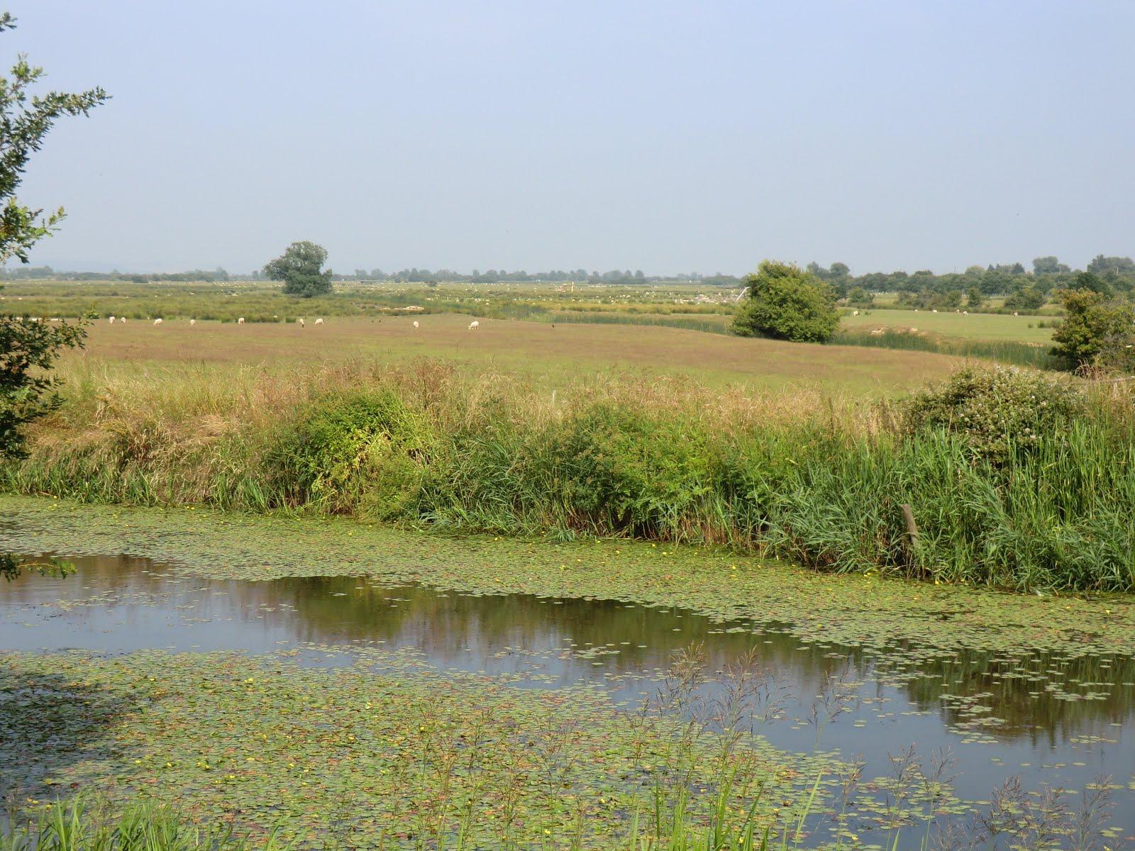 CIMG8016 Romney Marsh