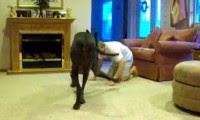 اللعب مع كلب العائلة