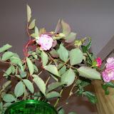 Bouquets - 115_1217.JPG