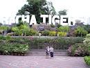 Tiger Zoo, bei Siracha, 2009