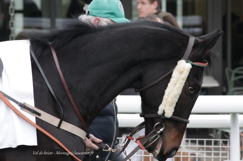 Photos Auteuil 29-11-2015 IMG_7591