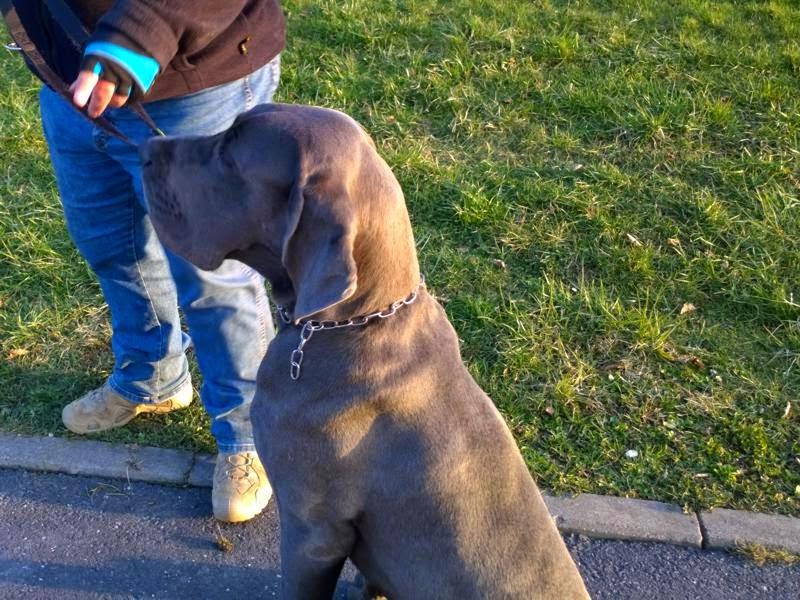 2015-04-07 Hundeschule Immenreuth On Tour in Marktredwitz im Auenpark - Marktredwitz%2B%25283%2529.jpg