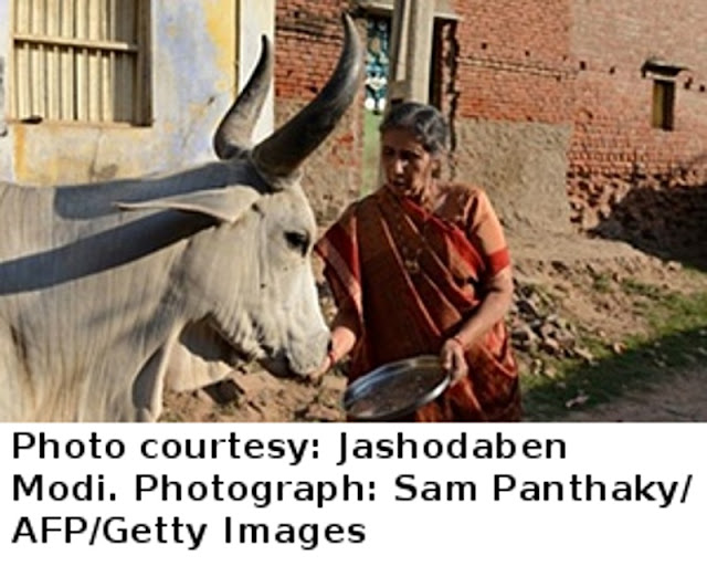 Ms. Jashoda Ben feeding a cow.