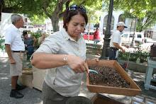 Demostracion de cafe en la Plaza publica de Ponce.