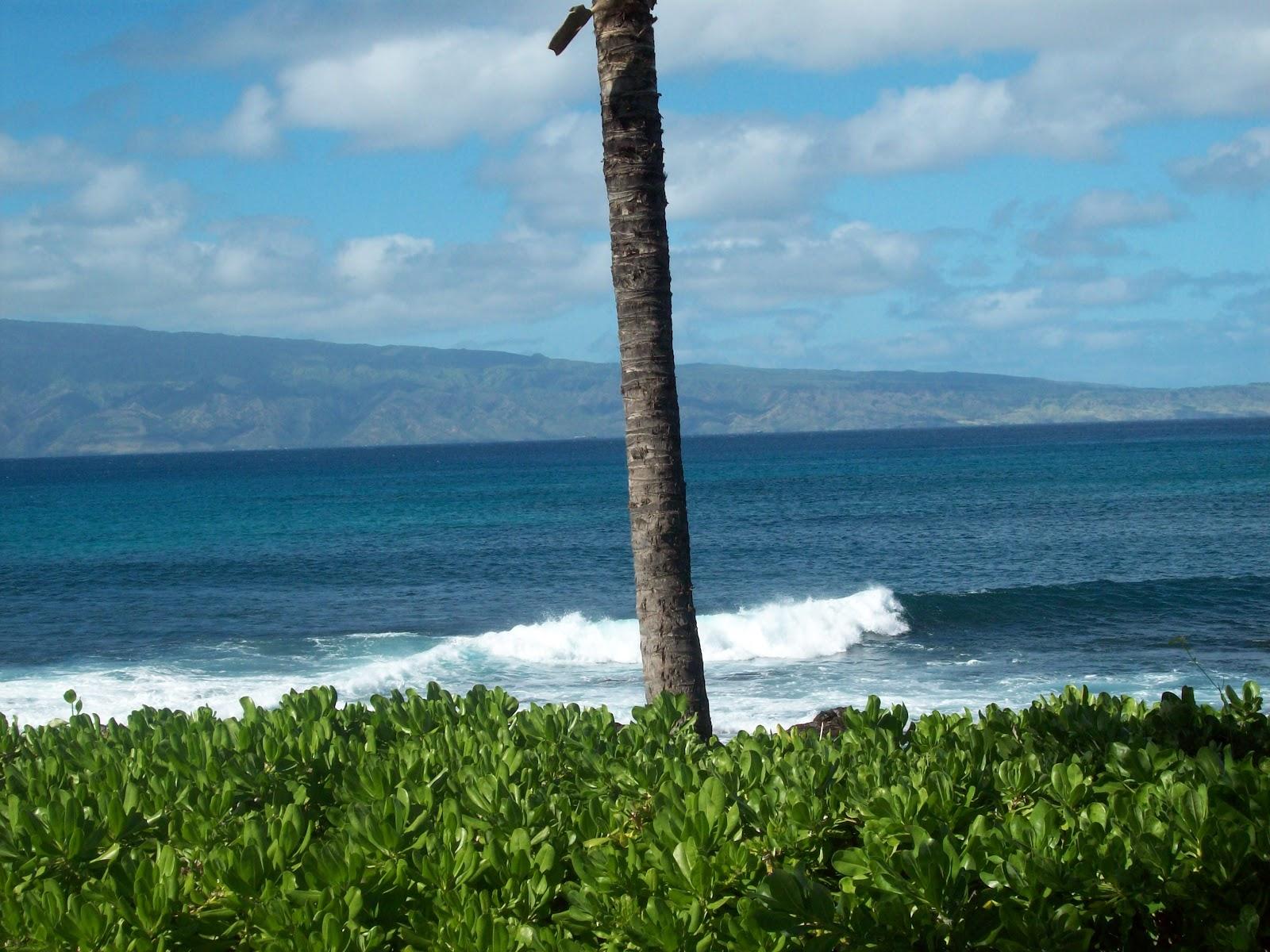 Hawaii Day 6 - 114_1793.JPG