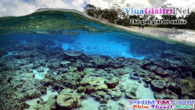 Xem Phim Khám Phá Rạn San Hô Vĩ Đại Với David Attenborough - Bbc: Great Barrier Reef With David Attenborough - phimtm.com - Ảnh 3