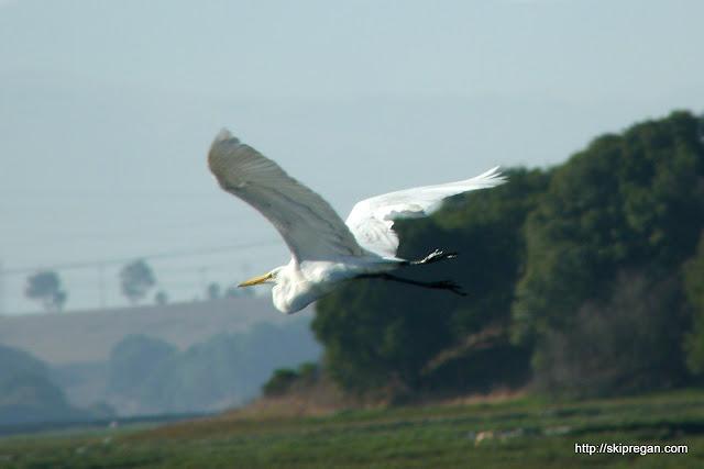 Bird-Festival-261.jpg