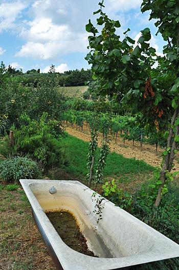 Toscana06.JPG
