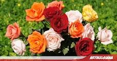 999+ Gambar Bunga yang Indah, Langka, Mahal dan Arti Makna Bunganya