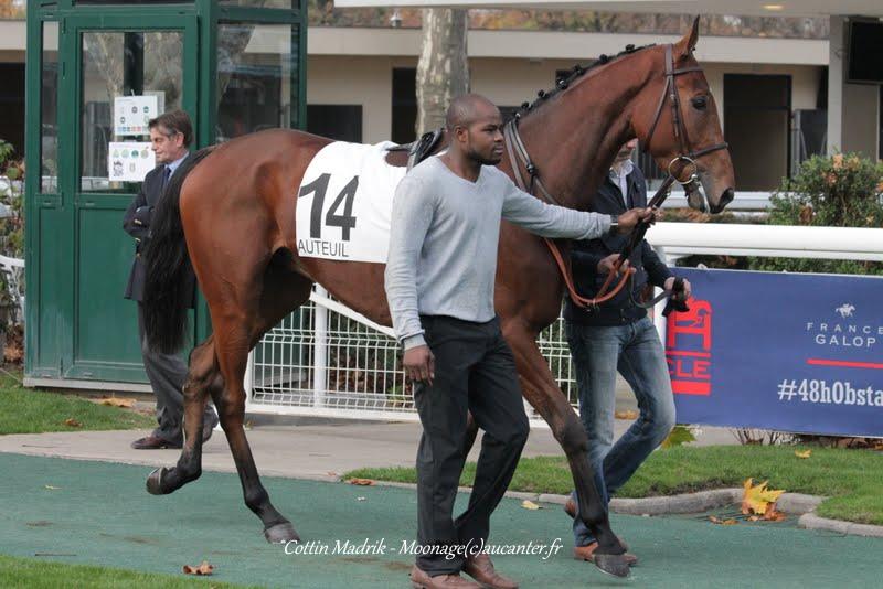 Photos Auteuil 7-11-2015 (48h de l'obstacle) IMG_6636