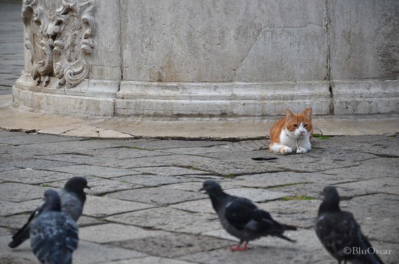 Gatti veneziani 10 10 2015 N 2