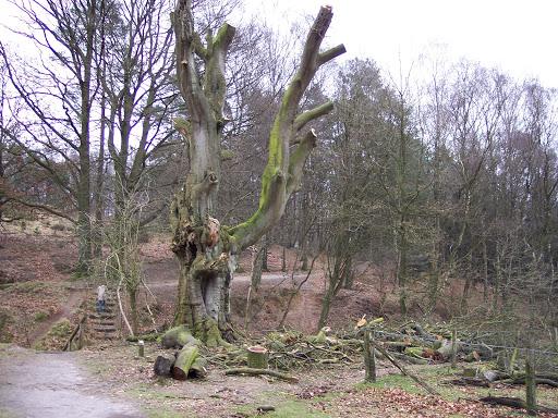Rheden 2008-01-27 (6).JPG