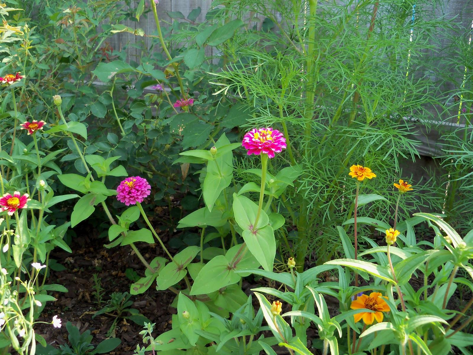 Gardening 2010, Part Two - 101_3028.JPG
