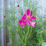 Gardening 2010, Part Three - 101_3970.JPG