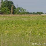 2013 Spring Flora & Fauna - IMGP6401.JPG