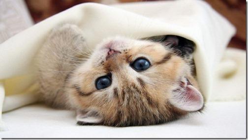 22 fotos de gats (30)