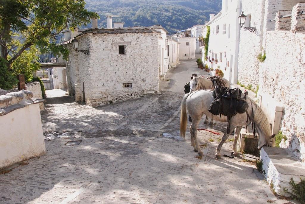 Calles tipicos