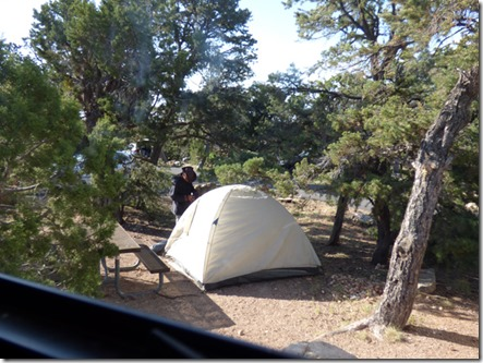 Campground Poachers, Desert View Campground, Grand Canyon