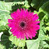 Gardening 2009 - 101_4912.JPG
