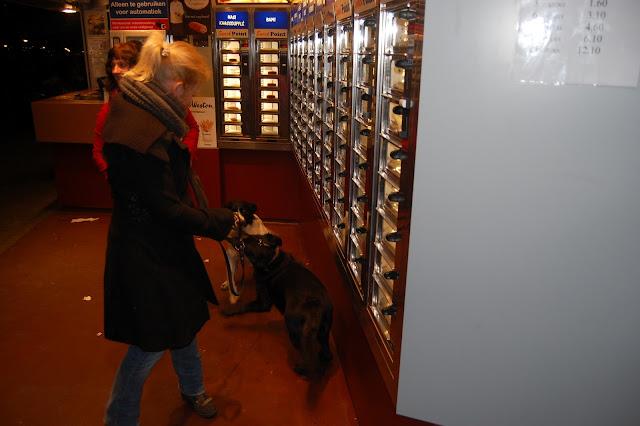 Jonge Hond centrum Emmen - 2012-04-01%2B024.JPG
