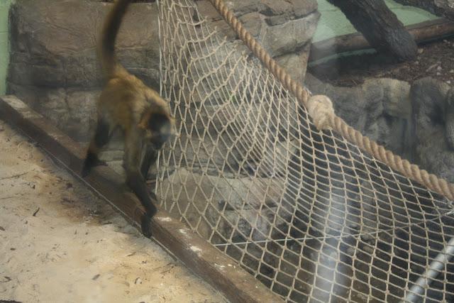 Zoo Snooze 2015 - IMG_7291.JPG