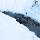 Уинка зимой не замерзает, как большинство рек и ручьев - птицы постоянно прилетают к нему попить