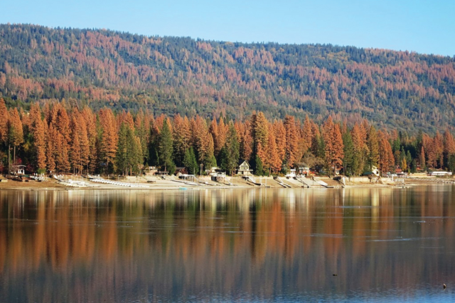 Tree mortality at Bass Lake, Sierra National Forest. Photo: U.S. Forest Service