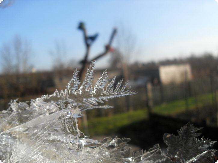Isfjer - haven i januar