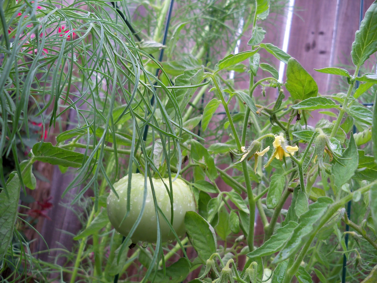 Gardening 2010, Part Two - 101_3228.JPG