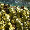 Buck Island Reef - IMGP1294.JPG