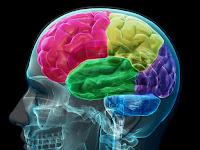 Tips Mengoptimalkan Kinerja Otak