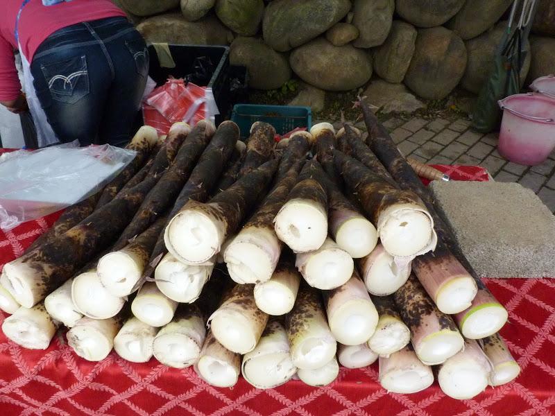 pousses de bambous