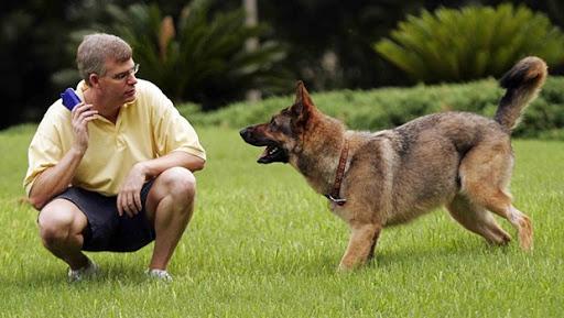 dog-training photo:dog training in tucson