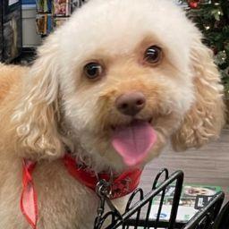 user Richard O'Connor apkdeer profile image