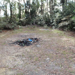 Fire scar south of Mt Warrawolong (59231)