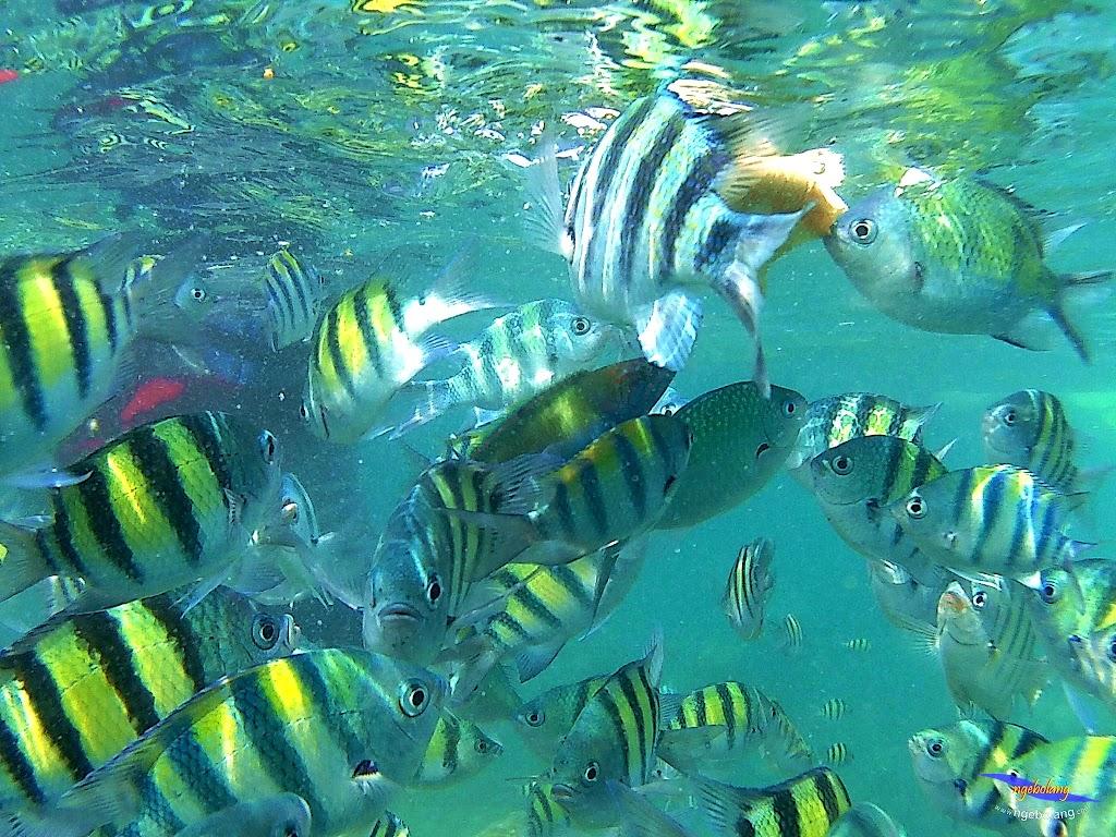 pulau harapan, 5-6 september 2015 skc 040