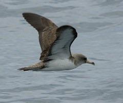 [bayoffundy.ca-SEABIRDS-40-Good-reaso%5B115%5D]