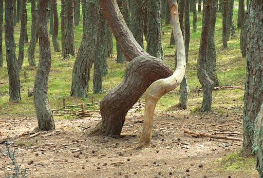 dancing-forest-kaliningrad-8