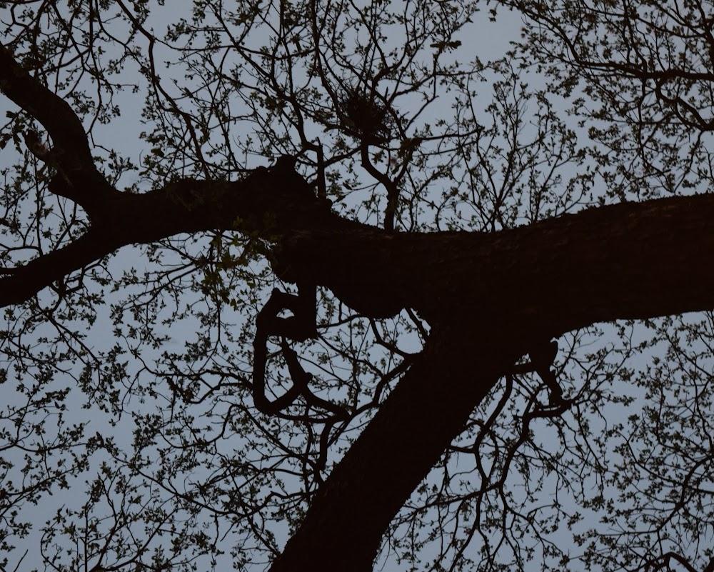 wonderfully lovely tree!