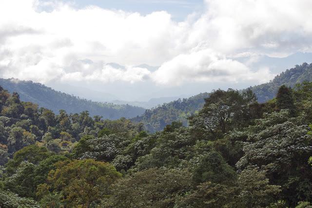 Los Cedros, 1400 m. Montagnes de Toisan, Cordillère de La Plata (Imbabura, Équateur), 21 novembre 2013. Photo : J.-M. Gayman
