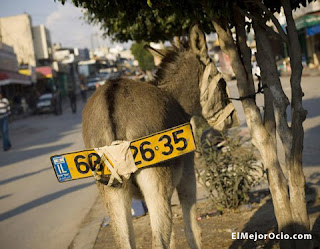 burro matricula