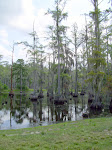 sam-houston-jones-state-park-lake-charles-la-2009 6-23-2009 2-52-22 PM 7-3-2009 10-55-54 AM.JPG
