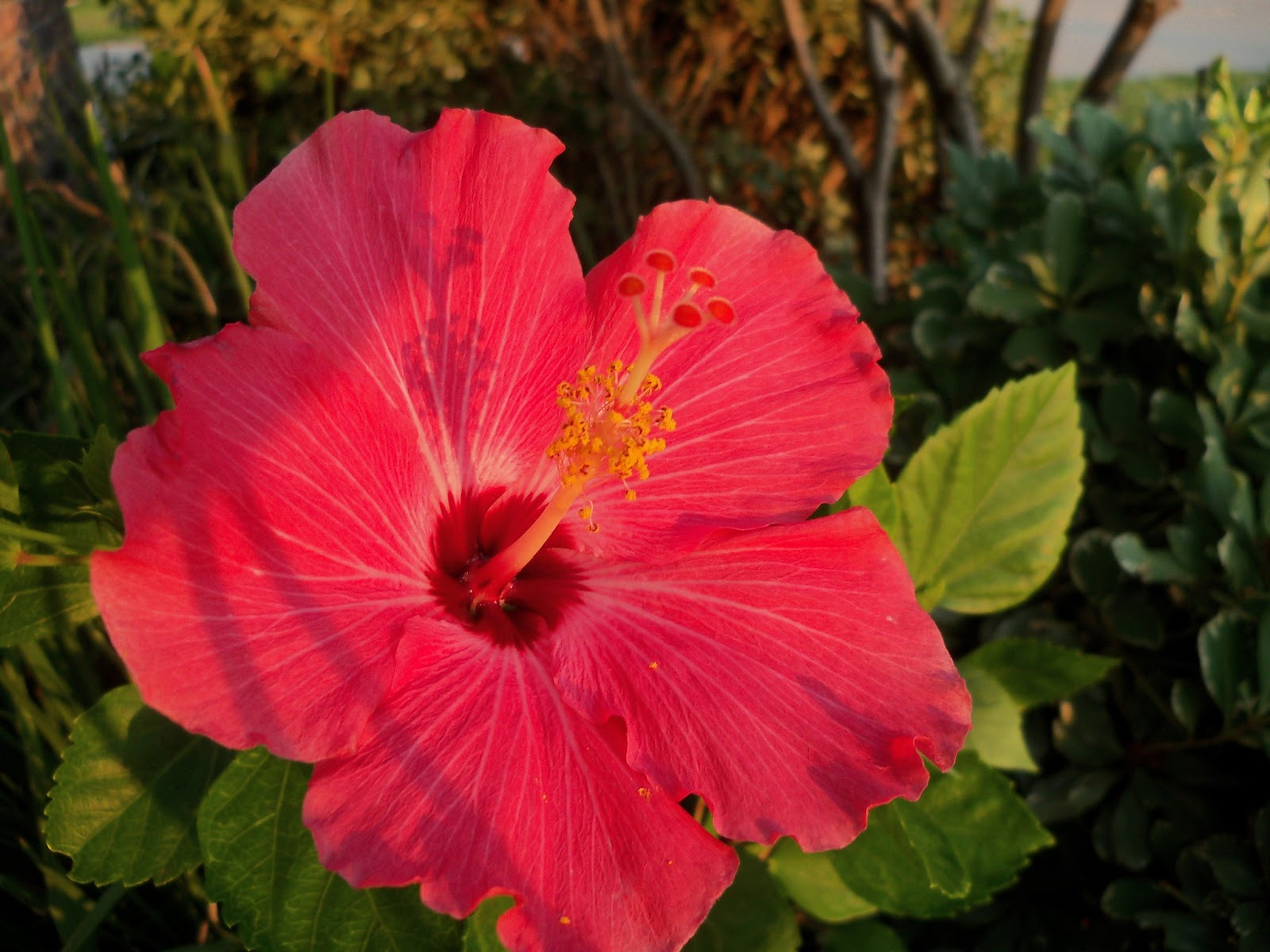 Gardening 2012 - 115_1894.JPG