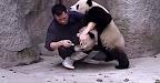 Tratador De Animais Inesperadamente Atacado Por Dois Pandas Bebés!!!